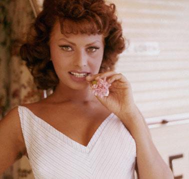 kitten - Sophia Loren Hair Color