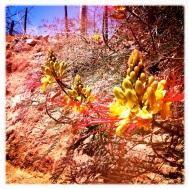 A desert flower, very intriguing and beautiful!