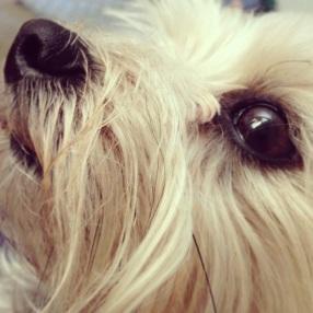 Baby-Dog Face
