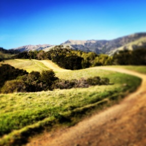 Tam Trails