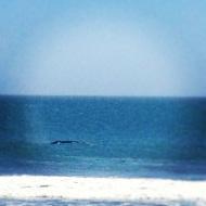 Whale Ridge